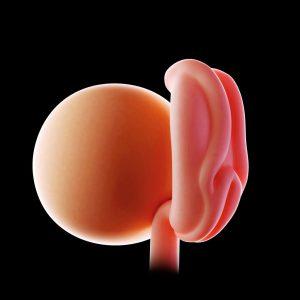 Graviditetsvecka 4