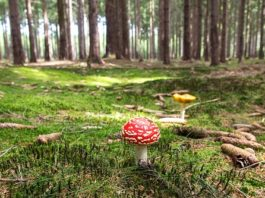 svamp i underlivet