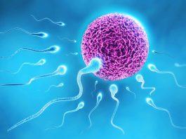 Spermier och ägg
