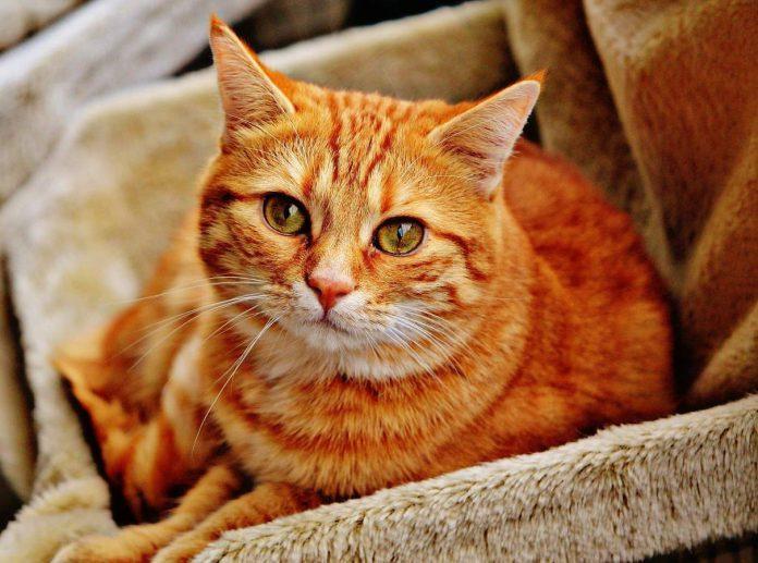 katt gravid kattlåda toxoplasma