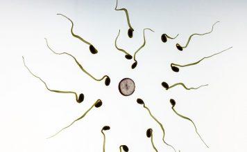 Bli gravid spiral