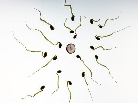 Bli gravid efter att ha använt kopparspiral - Gravid.se