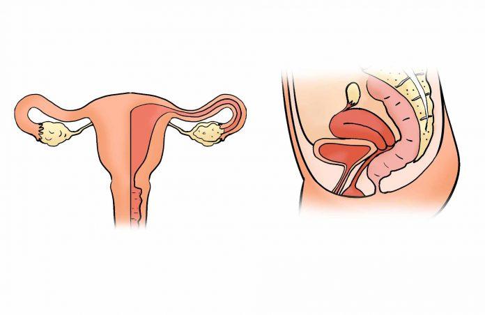 Ägglossning