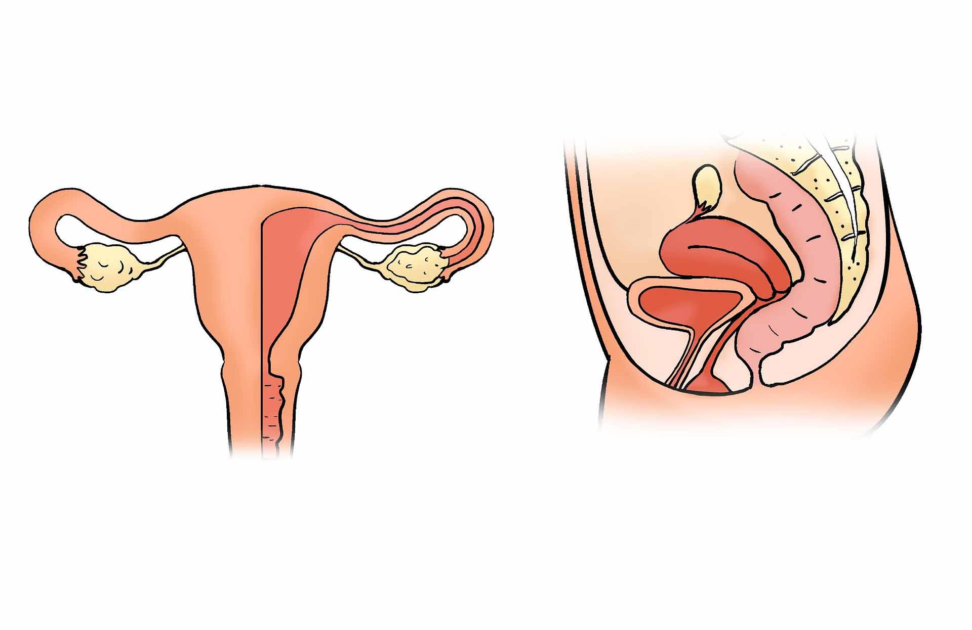 tecken på ägglossning efter förlossning